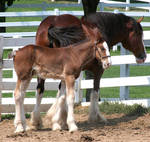 078 : Foal and Mare by Nylak-Stock