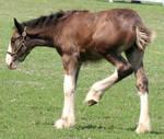 080 : Foal Kick