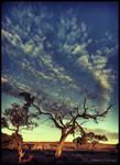 Dead tree by godintraining