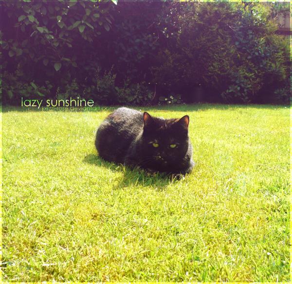 Lazy Sunshine by Kezzi-Rose