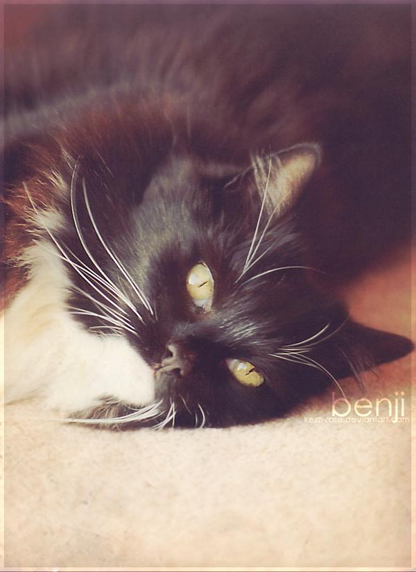 Benji by Kezzi-Rose