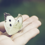 Please Fly Away..