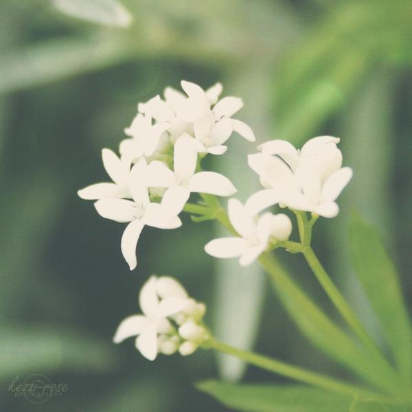 Pretty Little Petals by Kezzi-Rose