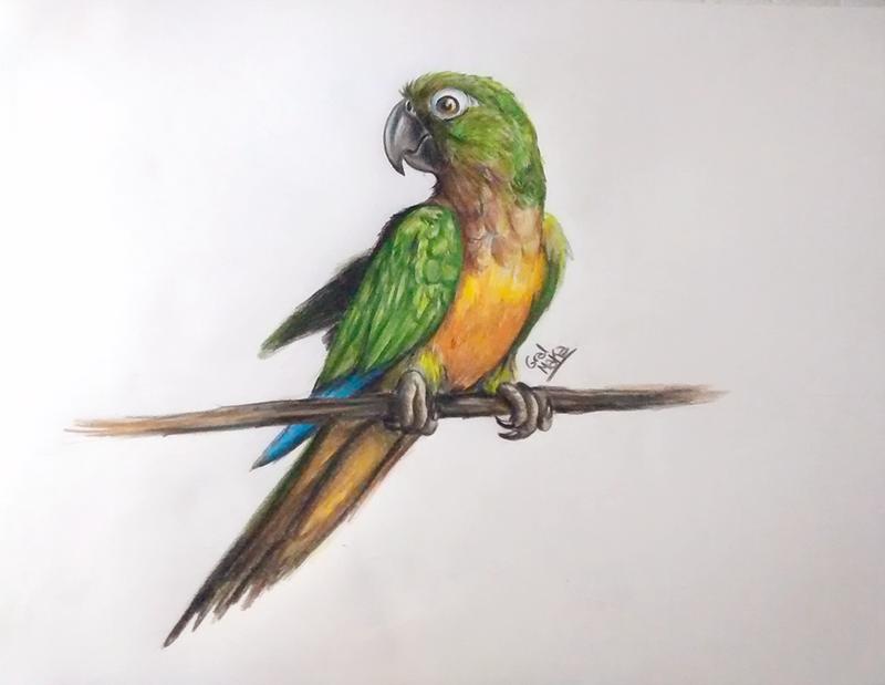 Parrot by GralMaka