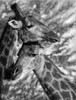 Giraffes-- Digital Drawing