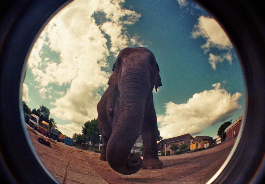 elephant 05 by Linda-Dubbink