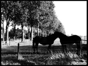 The bihorse by horatzioo