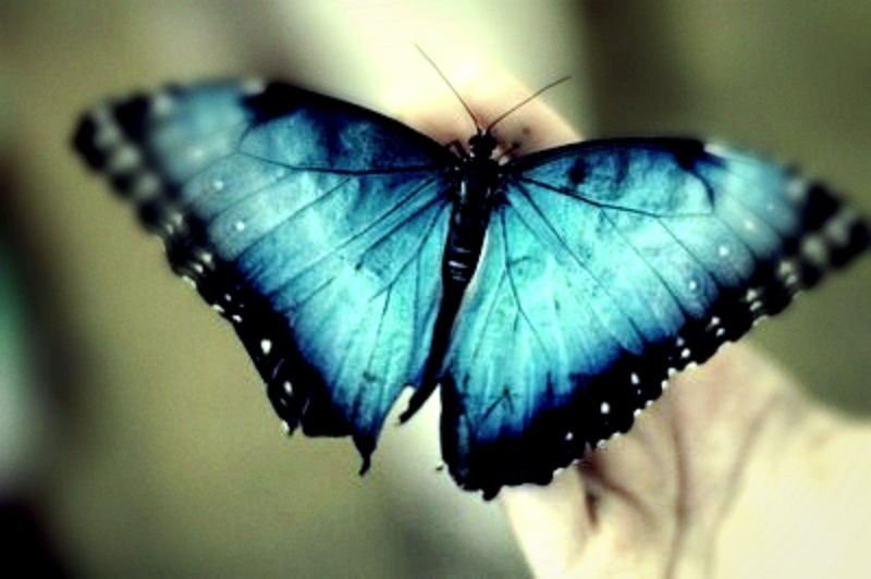 Butterfly flying away - photo#5