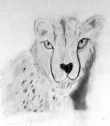 Cheetah Study by Actonrf