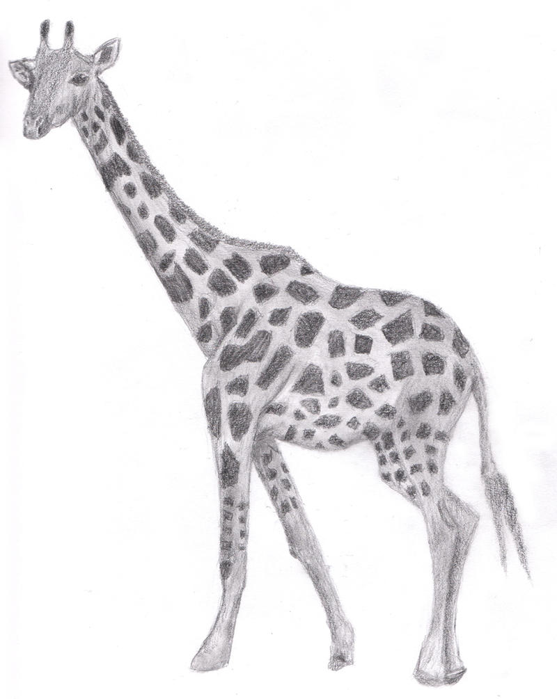 Drawing giraffe by justinms66 on deviantart for Giraffe draw something