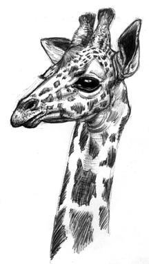 Animal by MissJema on DeviantArt
