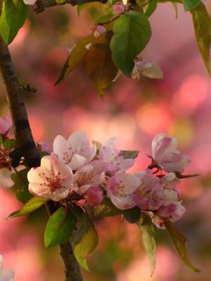 Spring magic by Yanagi-no-Yume