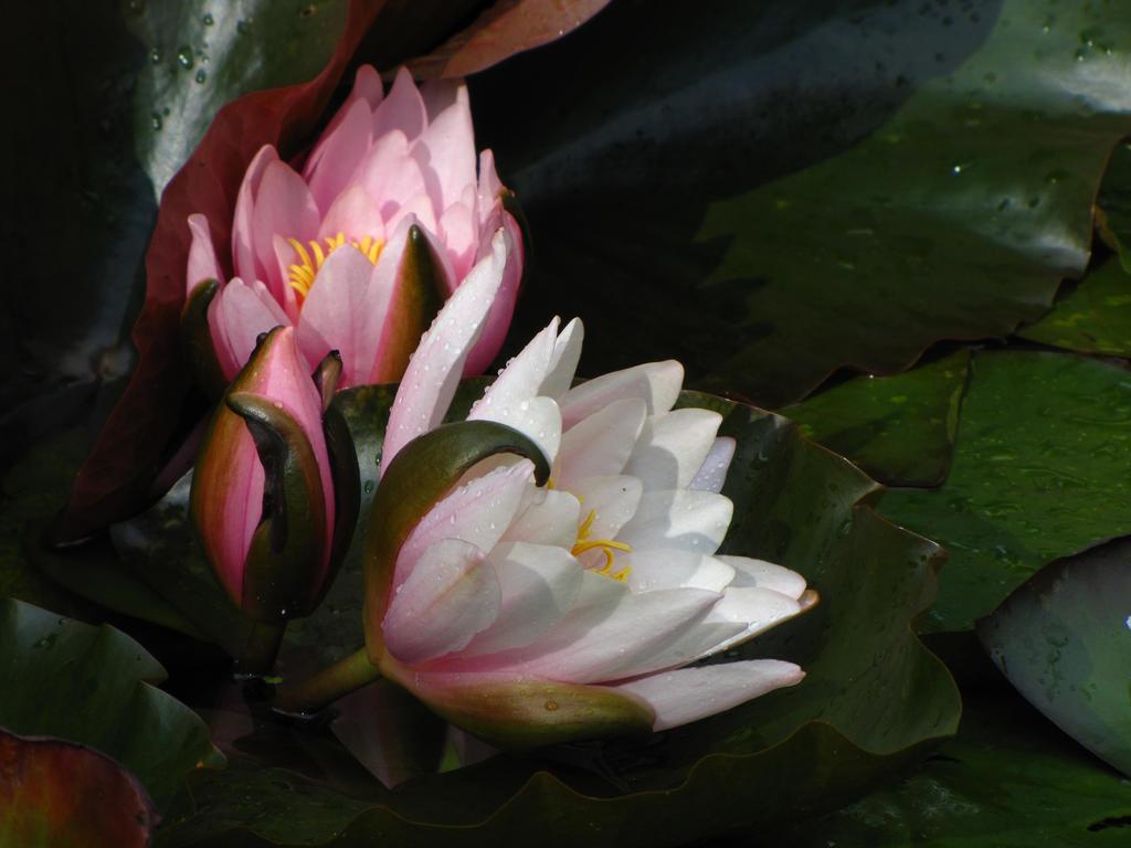 Midsummer bouquet by Yanagi-no-Yume