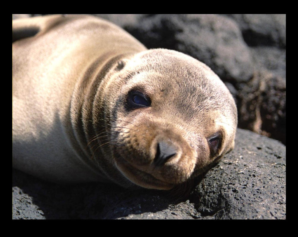 Animal Extinction Essay