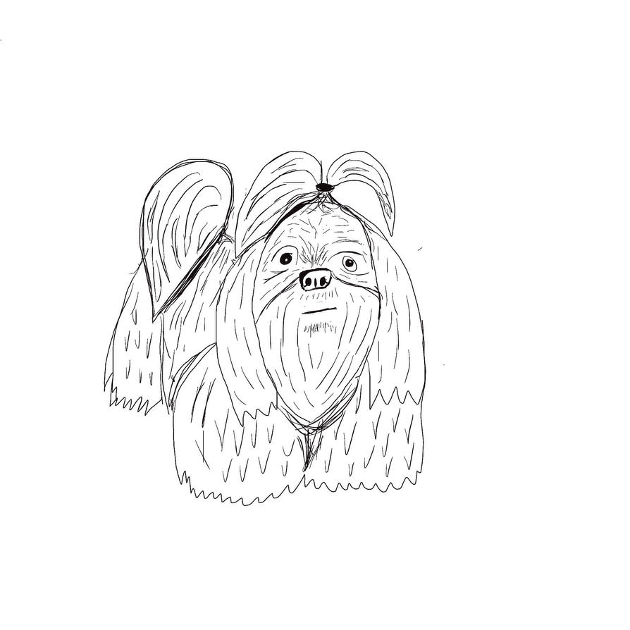 Yorkie Shih Tzu Coloring Pages Coloring Pages Shih Tzu Coloring Pages