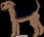 [KC] Terrier - Companion
