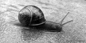 Snail 2013-05-05 by vmcampos