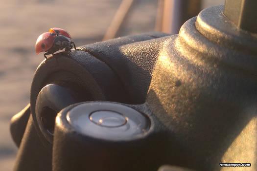 Macro Ladybug 20150315
