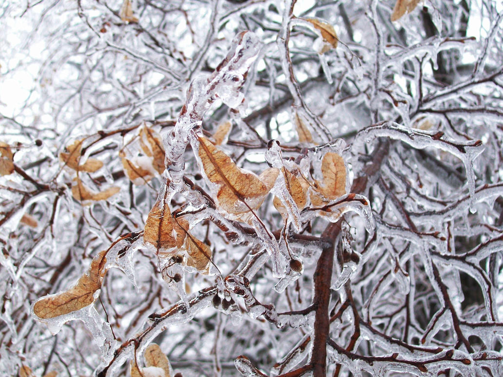 Frozen in Time by Dark-Raven622