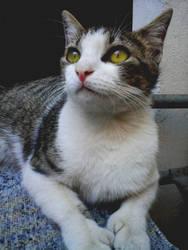 Lola The Cat by Bleu25