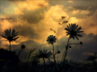 Twilight Fade in Heaven Made by DanielBrooksLaurent