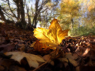 Turning Over an Old Leaf by DanielBrooksLaurent