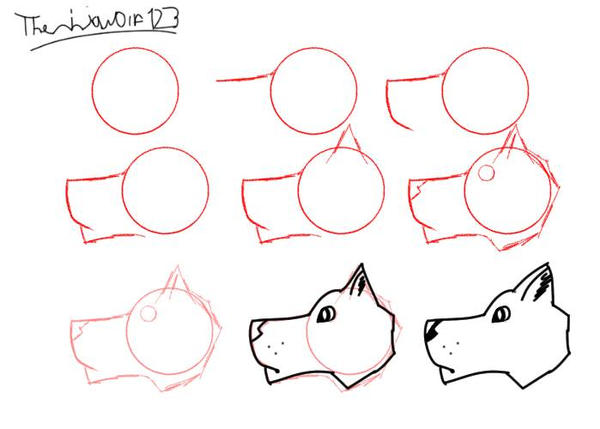 How to draw a wolf head 2 by theninjawolf123