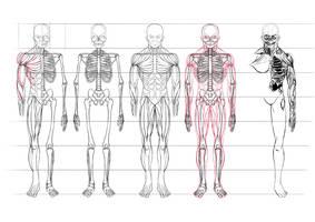 Anatomy of a Zombie