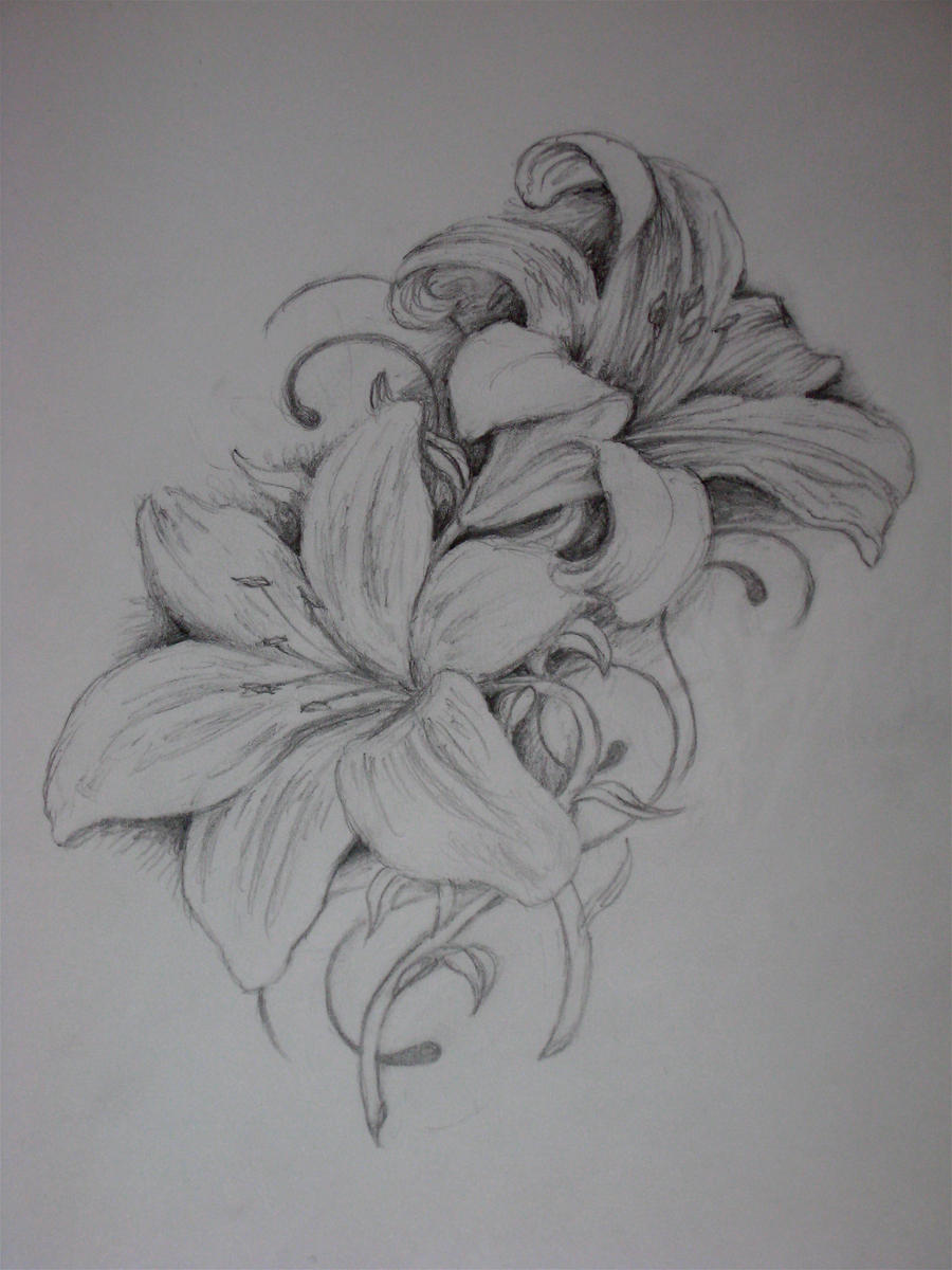 This is a graphic of Clean Tiger Lily Flower Drawing