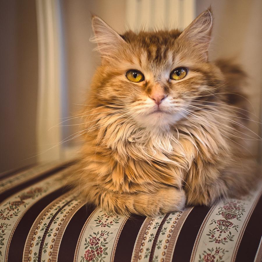 Katt II by Anselmeth