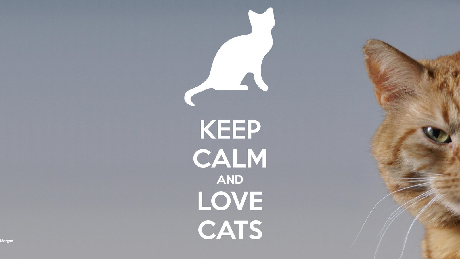 Keep-calm-and-love-cats-672 by MorgMonster on DeviantArt