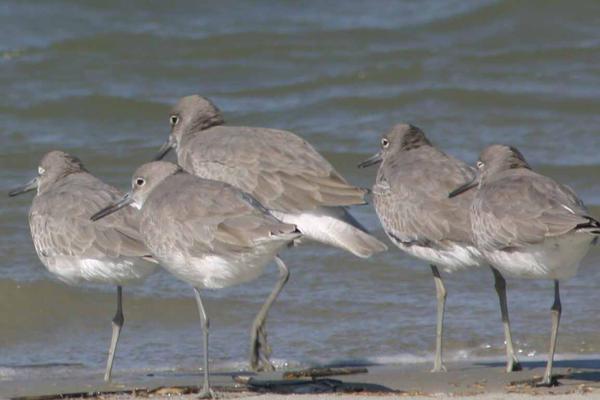 Birds in a Row by Deidreofthesorrows