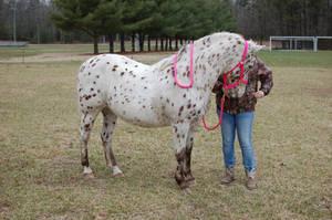 POA pony 1 by somestock