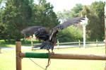 Vulture 8