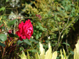 flores by leandro-araujo