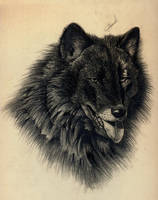 lost wolf by HAMAD-1