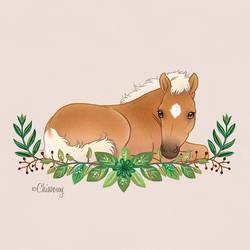 Birth announcement card little foal