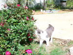 sniffin cat
