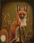 Houswarming Fox