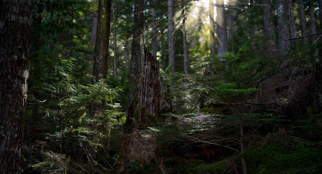 Dark forest shrine