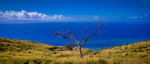 Maui mountain view with tree