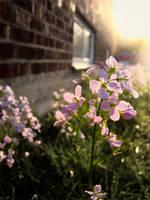 Summer breeze by Swebliss