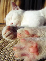 kitty paws by puszika