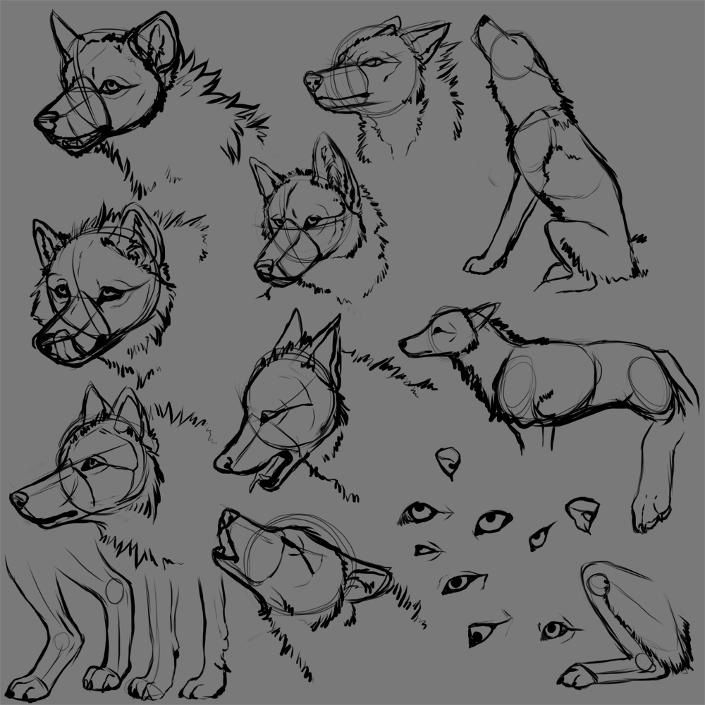 Wolf front drawing