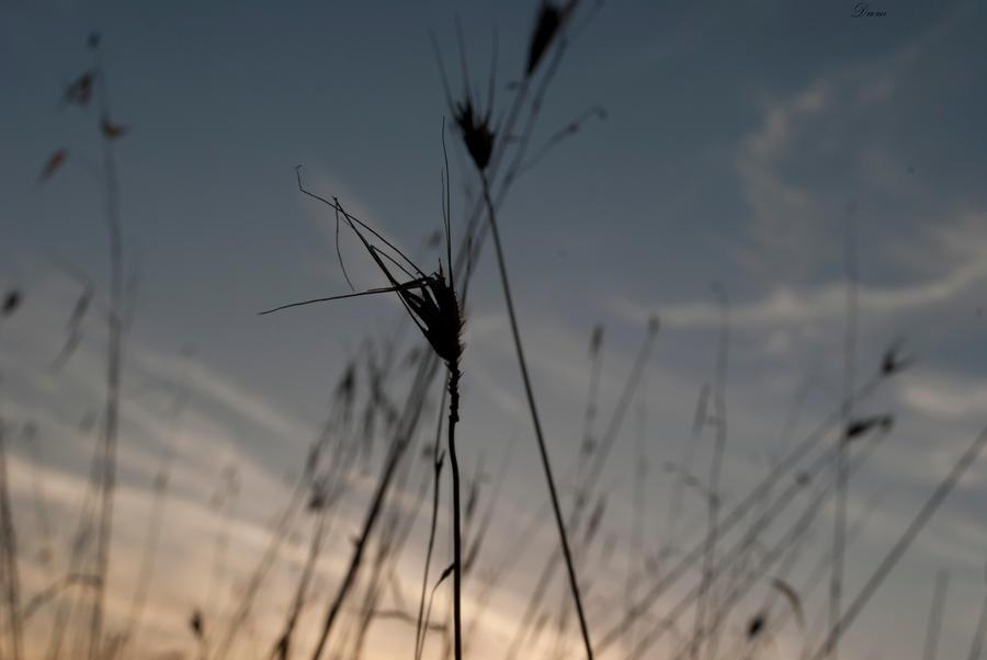Hay by DscoverMyWorld