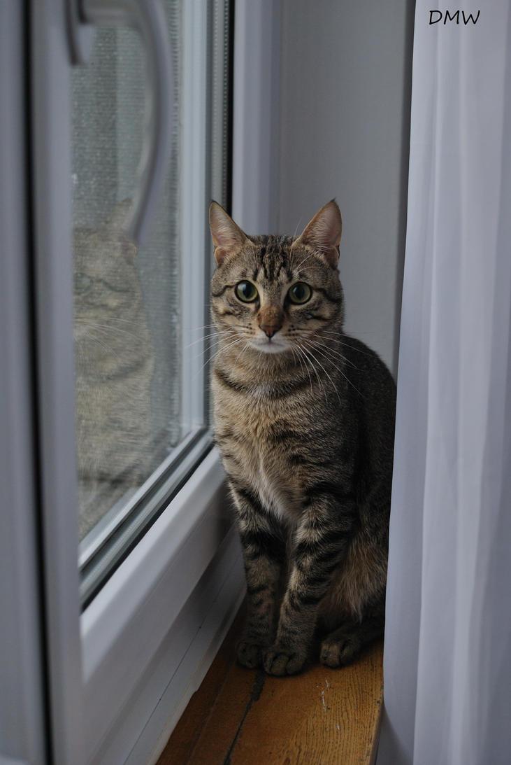 Kitten :) by DscoverMyWorld