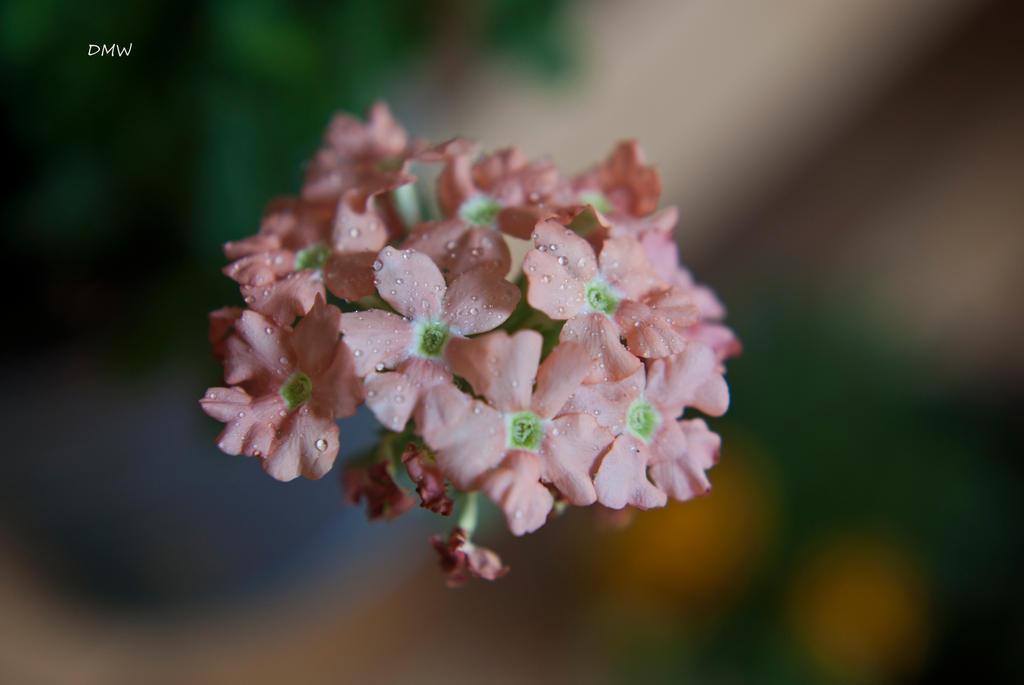 Macro flower :) by DscoverMyWorld