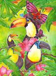 tucan paradise