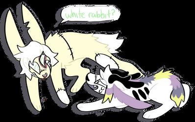 go chasing rabbits