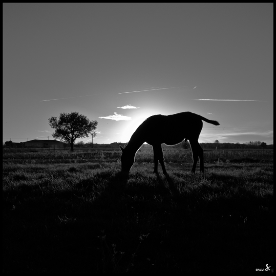 De Bouchetis 07 by salviphoto